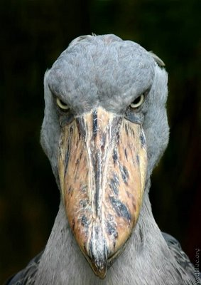scary_bird