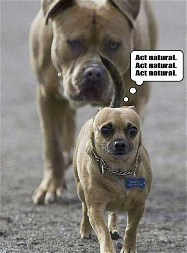 Funny-Animals-act-natural