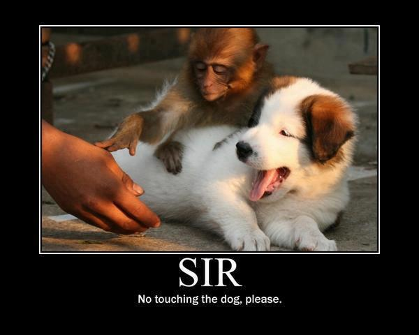 funny-animals-dog-monkey-Favim.com-465741